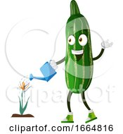 Cucumber Watering Plant