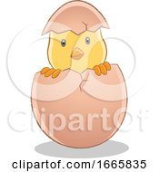 Poster, Art Print Of Hatching Easter Chick