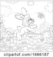 Black And White Bunny Rabbit Chasing A Butterfly