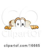 Scared Slice Of White Bread Food Mascot Cartoon Character Peeking Over A Surface