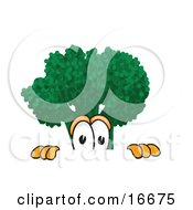 Scared Green Broccoli Food Mascot Cartoon Character Peeking Over A Surface