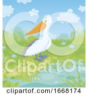 Pelican At A Pond