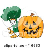 Green Broccoli Food Mascot Cartoon Character Standing By A Halloween Pumpkin