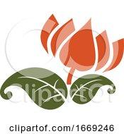 Indian Lotus Flower