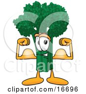Green Broccoli Food Mascot Cartoon Character Flexing His Arm Muscles