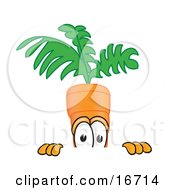 Clipart Picture Of An Orange Carrot Mascot Cartoon Character Nervously Peeking Over A Surface by Toons4Biz