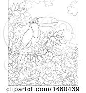 09/25/2019 - Toucan Bird
