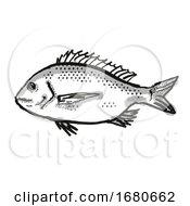Silver Bream Australian Fish Cartoon Retro Drawing