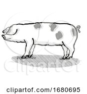 Gloucestershire Old Spots Pig Breed Cartoon Retro Drawing