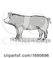 Berkshire Pig Breed Cartoon Retro Drawing