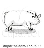 Middle White Pig Breed Cartoon Retro Drawing