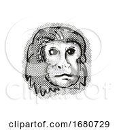 Golden Lion Tamarin Monkey Cartoon Retro Drawing