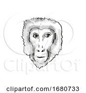 Assam Macaque Monkey Cartoon Retro Drawing