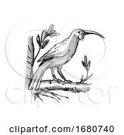 Huia New Zealand Bird Cartoon Retro Drawing
