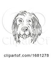 Bernedoodle Or Bernese Mountain Poo Dog Breed Cartoon Retro Drawing