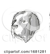 Saint Bernard Dog Breed Cartoon Retro Drawing