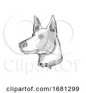 Ibizan Hound Dog Breed Cartoon Retro Drawing