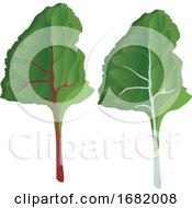 Poster, Art Print Of Green Silver Beet Leafs