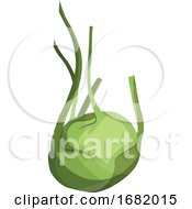 Light Green Kohlrabi