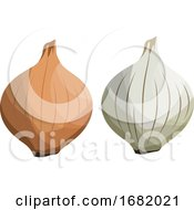 Brown And White Onion