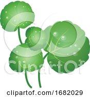Green Water Cress Leafs