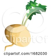 Poster, Art Print Of White Turnip Root With Green Leafs