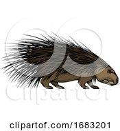 Tough Porcupine