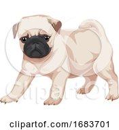 Poster, Art Print Of Pug Dog