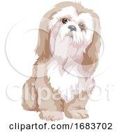 Poster, Art Print Of Bolognese Dog