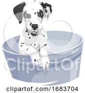 Poster, Art Print Of Dalmation Dog In Bathtub