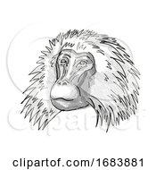 Poster, Art Print Of Shaggy Male Gelada Monkey Cartoon Retro Drawing
