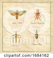 10/15/2019 - Sphinx Moth Stag Beetle Stick Insect And Zuphium Beetle Vintage Collection