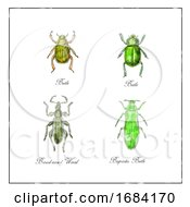 10/15/2019 - Beetle Broad Nosed Weevil And Buprestis Beetle Vintage Collection