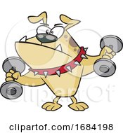 Cartoon Tough Bulldog Working Out With Dumbbells