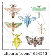 10/19/2019 - Vintage Moth Dragonfly Mantis And Stick Insect Collection On White Background