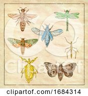Vintage Moth Dragonfly Mantis And Stick Insect Collection On Antique Paper