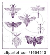 Vintage Moth, Dragonfly, Mantis and Stick Insect Collection Duotone on White Background by patrimonio #COLLC1684315-0113