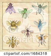 10/19/2019 - Vintage Bees And Flies Collection On Antique Paper