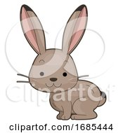 Animal Desert Jack Rabbit Illustration