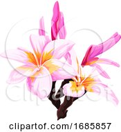 Vector Of Fresh Pink Flower