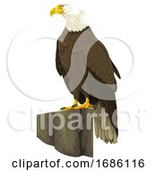 Poster, Art Print Of Vector Of Bald Eagle