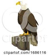 Vector Of Bald Eagle