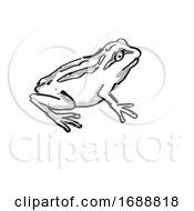 Whistling Tree Frog New Zealand Wildlife Cartoon Retro Drawing