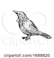 Tui New Zealand Bird Cartoon Retro Drawing