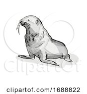 Fur Seal New Zealand Wildlife Cartoon Retro Drawing