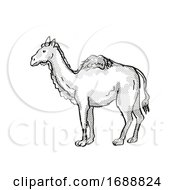Western Camel Extinct North American Wildlife Cartoon Drawing