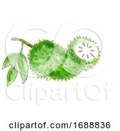 Soursop Fruit Or Graviola Watercolor