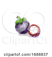 Mangosteen Fruit Watercolor