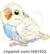 Cute Baby Budgie Parakeet Bird