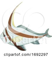 Cute Jackknife Fish